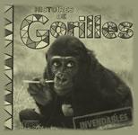 Histoires de Gorilles_SMALL_150x150