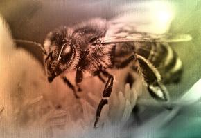 Včela_upraveno